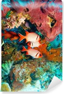 Vinyl Fotobehang Tropische vissen in de buurt van Kleurrijke Coral Reef