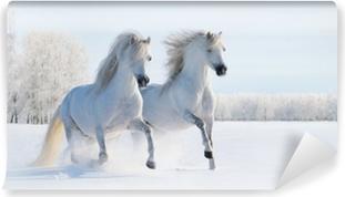 Vinyl Fotobehang Twee galopperen witte pony's