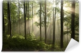 Vinyl Fotobehang Voorjaar beukenbos na een paar dagen regen in een mistige ochtend