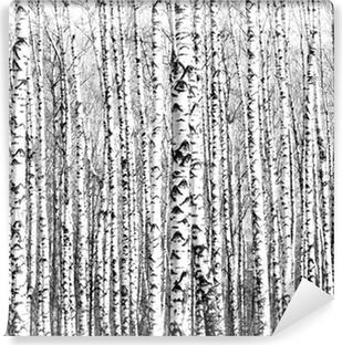 Vinyl Fotobehang Voorjaar stammen van berken zwart en wit