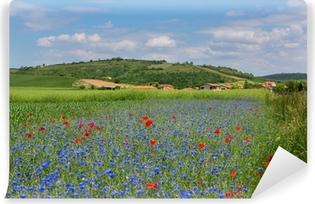 Vinyl Fotobehang Weide met korenbloemen en klaprozen in Auvergne