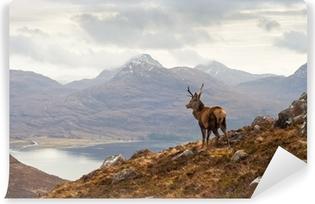 Vinyl Fotobehang Wild hert, Schotse hooglanden