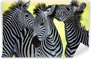 Vinyl Fotobehang Zebra's zoenen en elkaar gekropen