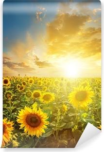 Vinyl Fotobehang Zomer landschap: schoonheid zonsondergang over zonnebloemen veld