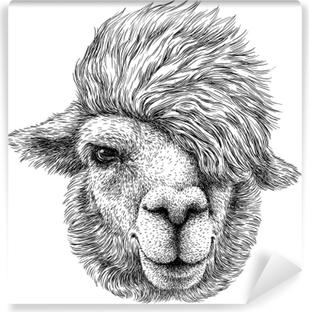 Vinyl Fotobehang Zwart en wit graveren geïsoleerde lama illustratie