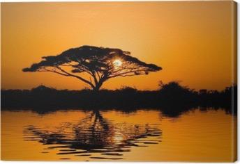 Acacia Tree ved solopgang Fotolærred