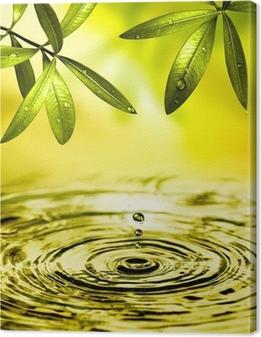 Blätter hængen über Wasser Fotolærred