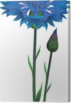 1fc59e22007 Lille buket af vilde levende store blå blomster af kornblomst Fotolærred •  Pixers® - Vi lever for forandringer