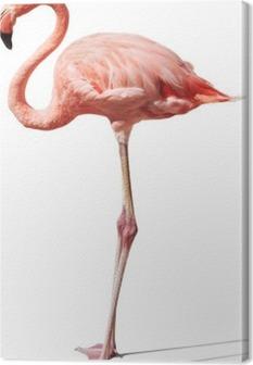 Flamingo på hvidt Fotolærred