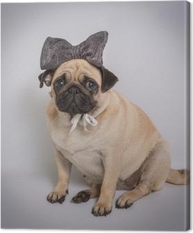 Funny Pug / Funny Pug på hvid baggrund Fotolærred