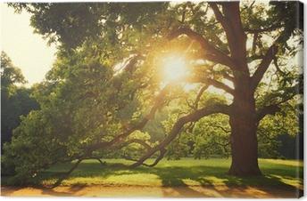 Gamle store træ Fotolærred