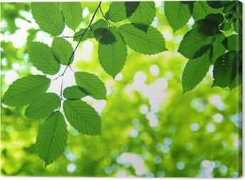 Grønne blade Fotolærred