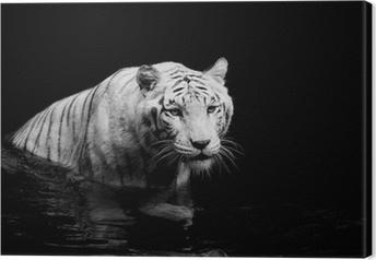 Hvid tiger Fotolærred
