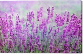 Lavendel Fotolærred