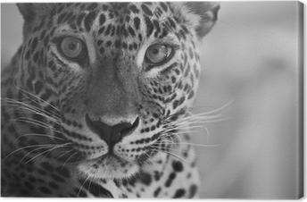Leopard Fotolærred
