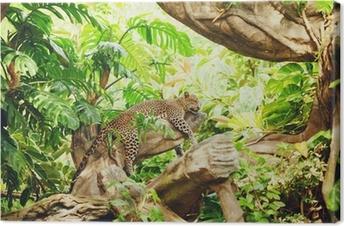 Liggende (sovende) leopard på trægren Fotolærred