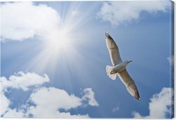 Måge under lyse sol Fotolærred