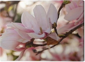 Magnolia træ Fotolærred