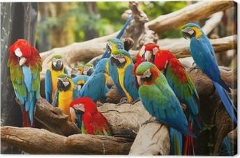 Parrot Fotolærred