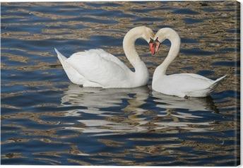Romantiske svaner i foråret. Fotolærred