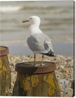 Seagull Fotolærred
