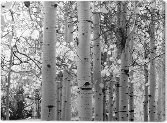 Sort og hvidt billede af aspen træer Fotolærred