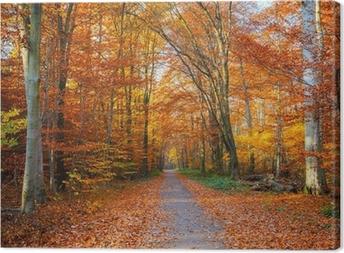 Sti i efterårskoven Fotolærred