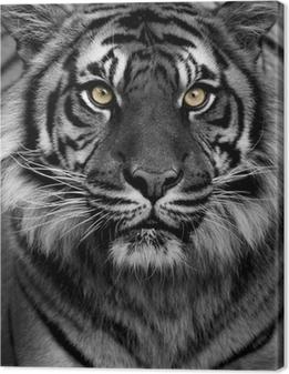 Tiger øjne Fotolærred