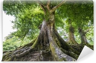 Fotomural Estándar Árbol grande y viejo