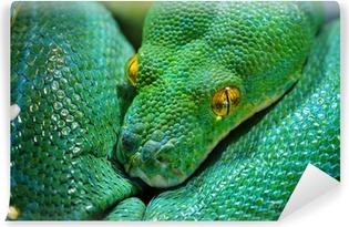 Fotomural Estándar Árbol verde python (morelia viridis)