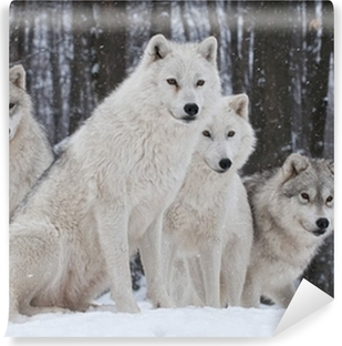Fotomural Estándar Arctic Wolf Pack