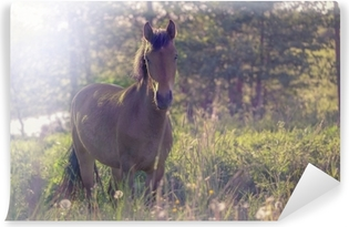 Fotomural Autoadhesivo Caballo marrón en medio de un prado en la hierba, los rayos del sol, entonados.