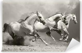 Fotomural Autoadhesivo Caballos blancos en polvo