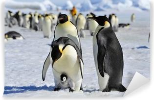 Fotomural Autoadhesivo Emperor penguin