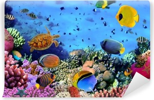 Fotomural Autoadhesivo Foto de una colonia de coral