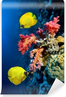 Fotomural Autoadhesivo Imagen submarina de los arrecifes de coral y peces Masked Butterfly
