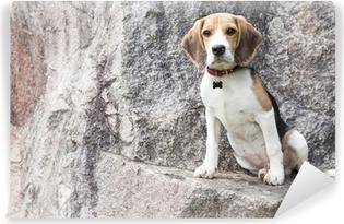 Fotomural Estándar Beagle perdido