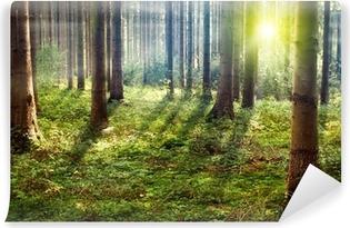 Fotomural Estándar Bosque de la puesta del sol
