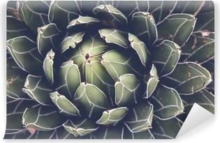 Fotomural Estándar Cierre de agave planta suculenta, atención selectiva, tonificación