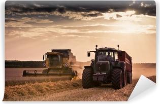 Fotomural Estándar Cosecha de trigo cosechadora tractor agrícola