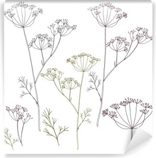 Fotomural Estándar Eneldo o las flores y las hojas de hinojo.