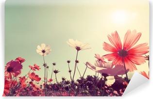 Fotomural Estándar Fondo de la vendimia paisaje de la naturaleza del campo de flores hermosas del cosmos en el cielo con la luz del sol. colores retro efecto de filtro de tono