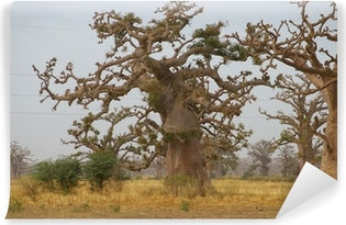 Fotomural Estándar Foret de Baobab