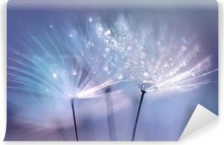 Fotomural Estándar Hermosa gotas de rocío en una macro de semillas de diente de león. Hermoso fondo azul. Ampliación de rocío de oro gotas en un diente de león paracaídas. forma de imagen artística tierna soñadora suave.