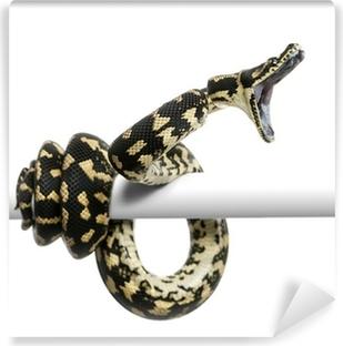 Fotomural Estándar Jungle alfombra python atacar, Morelia spilota cheynei