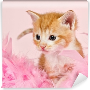 Fotomural Lavable Plumas rosadas que rodean un gatito ginder