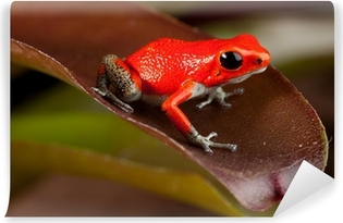 Fotomural Lavable Red frog