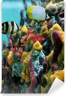 Fotomural Estándar Los colores vibrantes de vida marina