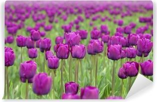 Fotomural Estándar Los tulipanes