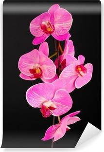 fotomural orquídeas en flor hermosa en el fondo de color claro